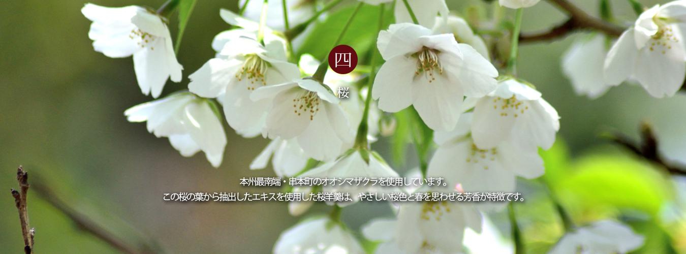 和歌山串本の大島桜